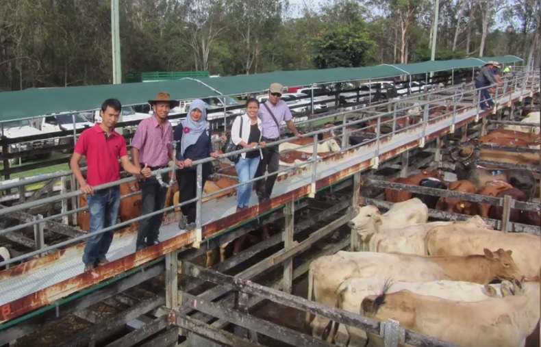 Red Meat and Cattle Partnership Program